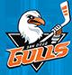 Gulls San Diego